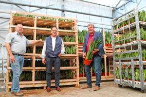Lees meer over het artikel Flora Futura onderzoekt alternatief voor Royal FloraHolland – Hortipoint